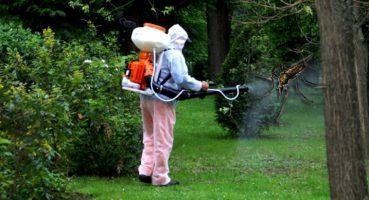 Se efectuează tratamente de combatere a țânțarilor și insectelor