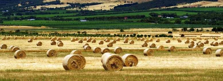 Registrul agricol din cadrul Primariei Municipiului Tecuci