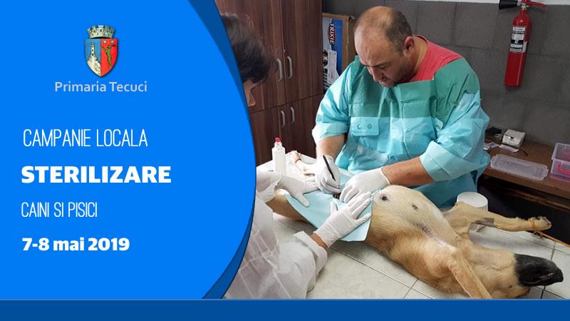 Campanie-de-sterilizare-caini-si-pisici-Tecuci-2019